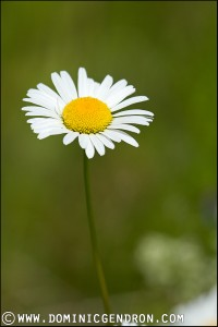 marguerite_MG_1830